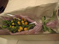 サンダーソニア花箱詰